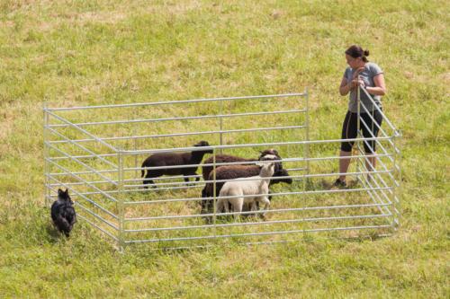 Stefi sai lambad aedikusse sisse.